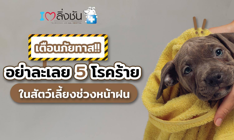 เตือนภัยทาส อย่าละเลย 5 โรคร้ายในสัตว์เลี้ยงช่วงหน้าฝน