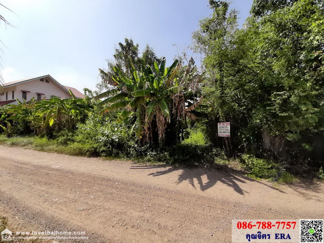 ภาพขายที่ดินเปล่าถนนคลองหลวงปทุมธานี ซอยคลองสี่ตะวันตก22 โซนคลองหลวงปทุมธานี พื้นที่377ตรว. ที่ดินสวย เหมาะสร้างบ้าน,โกดัง เดินทางสะดวก ขายไม่แพง