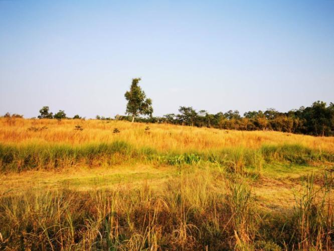 ที่ดินเขาค้อ KhaoKho Land ที่ดิน แบ่งขาย #เขาค้อ เพชรบูรณ์ แปลงสวย #วิวทะเลหมอก บรรยากาศดี
