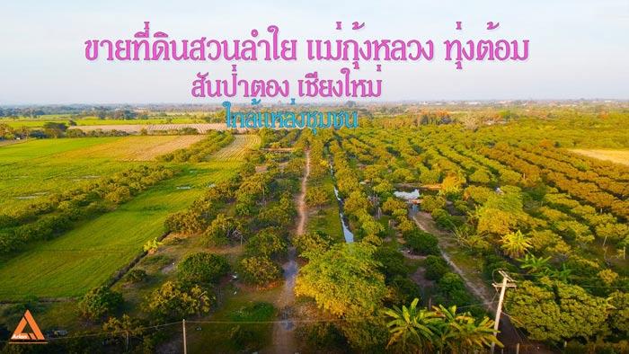 ภาพขายที่ดินสวนลำใย แม่กุ้งหลวง ทุ่งต้อม สันป่าตอง เชียงใหม่ ใกล้แหล่งชุมชน