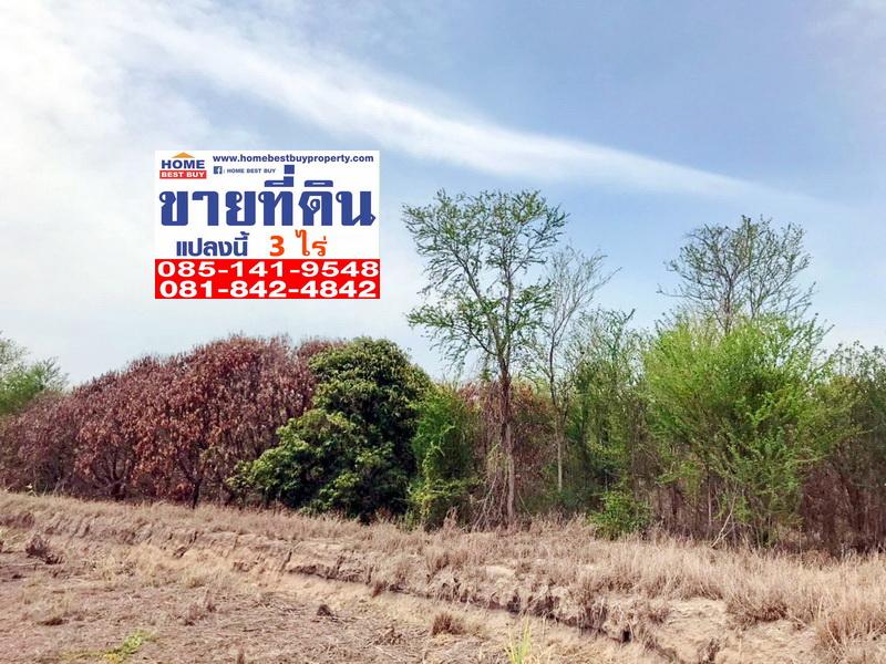 ภาพขายที่ดินพร้อมสวนมะม่วง อำเภอดอนเจดีย์ จ.สุพรรณบุรี