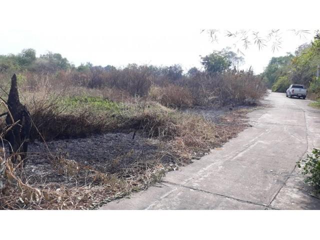 ภาพขายที่ดิน 6-1-76 ไร่ ชลบุรี ไร่ล่ะ  5 ล้าน