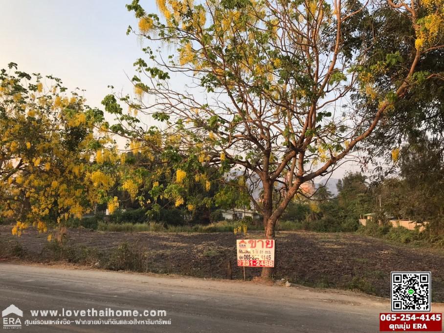 ภาพขายที่ดินพระพุทธบาท สระบุรี ติดถนนทางหลวงแผ่นดินสายหนองคัณที-ห้วยบง (3250)