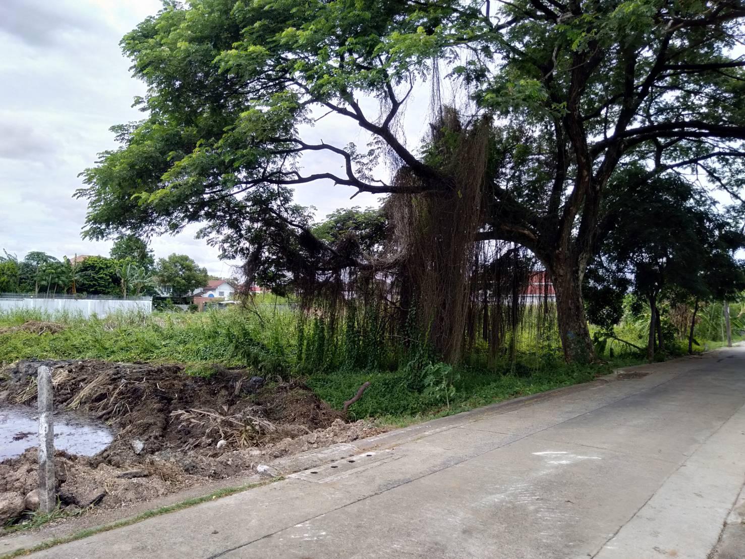 ภาพที่ดินเใกล้สถานีรถไฟบ้านฉิมพลี