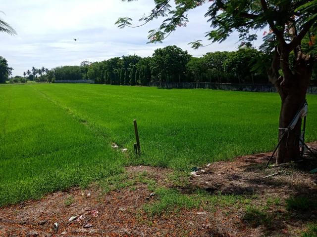 ภาพที่ติดถนน340 สุพรรณ-ชัยนาท