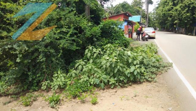 ภาพขายที่ดินเปล่าทำเลดี1ไร่1งาน  ต.พุทเลา อ.บางประหัน