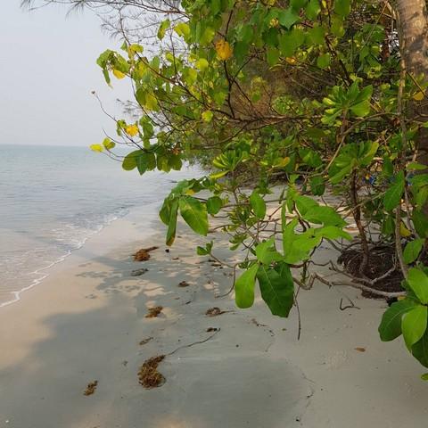 ภาพขายที่ดินติดหาดไพลิน อ.คลองใหญ่ ตราด 1-1-06ตรว.