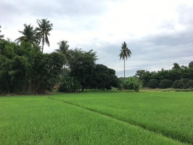 ภาพLand For Sale in Maerim Chiangmai
