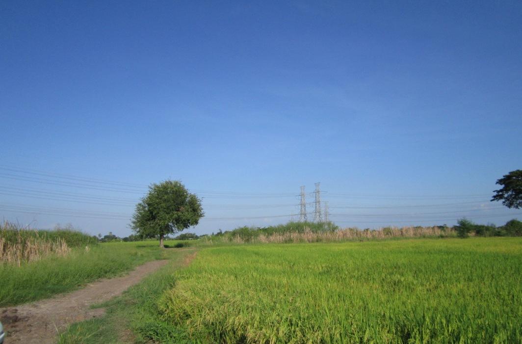 ภาพ0257 ขายที่ดิน 25 ไร่ ถ.ราษฎร์อุทิศ ใกล้สถานีรถไฟฟ้ามีนบุรี