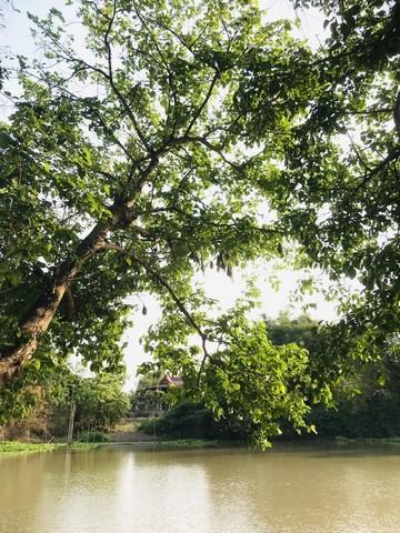 ที่ดินสวยสมราคา ติดแม่น้ำท่าจีน สุพรรณบุรี