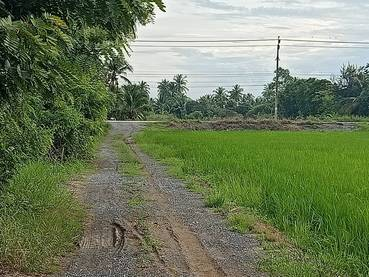 ขายที่ดิน 3 ไร่ ขายยกแปลง ราคา 3,900,000 รวมค่าโอนและภาษี  เจ้าของขายเอง