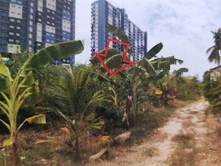 ขายที่ดินเปล่า 1 ไร่ ใกล้หาดชะอำ จังหวัดเพชรบุรี ราคาต่อรองได้ เจ้าของขายเอง โทร 0803522499
