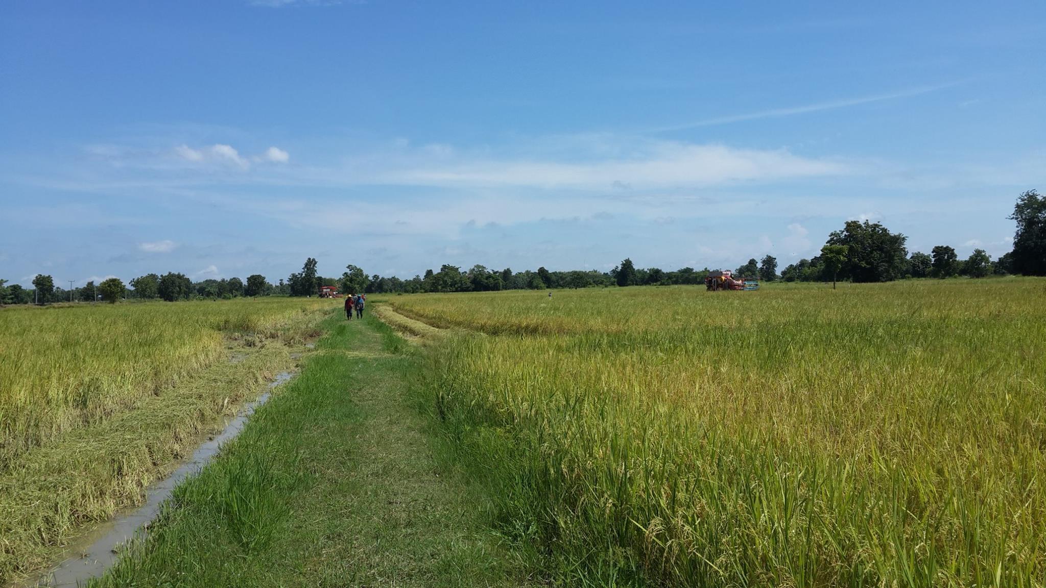 ขายที่ดิน ทำการเกษตร อุตสาหกรรม ติดถนน 4 เลน เมือง สุโขทัย