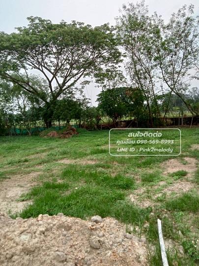 *ด่วน!! ขายที่ดินในเชียงใหม่  ติดสนามกอล์ฟ ใน ตำบลหนองจ๊อม อำเภอสันทราย จังหวัดเชียงใหม่