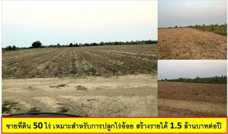 ขายที่ดิน 50 ไร่ เหมาะสำหรับการปลูกไร่อ้อย สร้างรายได้ 1.5 ล้านบาทต่อปี