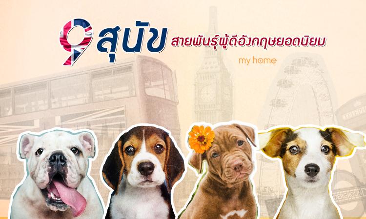 9 สุนัขสายพันธุ์ผู้ดีอังกฤษยอดนิยม พร้อมข้อมูลลักษณะนิสัยและกายภาพ