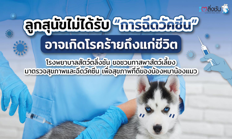 ชวนเจ้าของสัตว์เลี้ยงพาน้องหมาน้องแมวมาฉีดวัคซีนกับแพ็กเกจ โปรแกรมฉีดวัคซีนลูกสุนัข